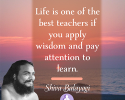Life is one of the best teachers